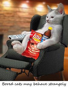 a bored cat 2