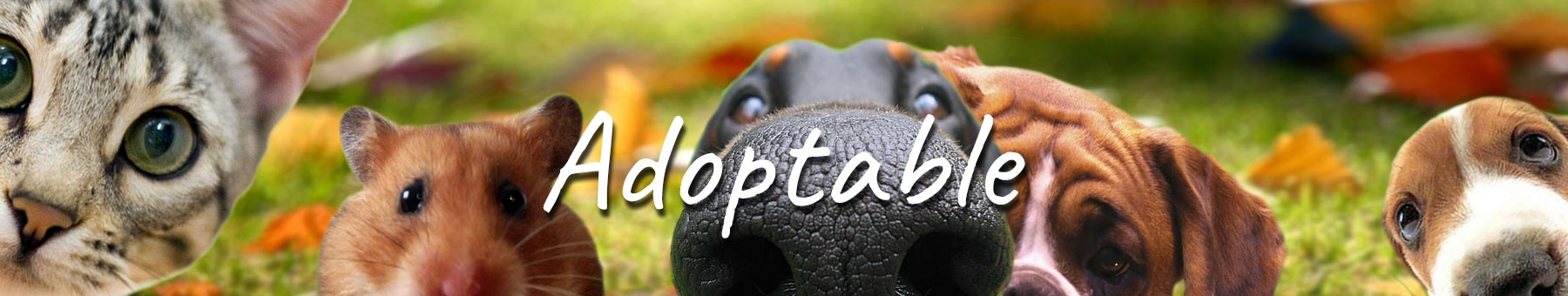 Adoptable - Cats and dogs in need of rehoming