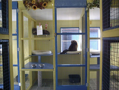 inside an indoor cattery