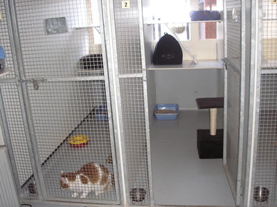 indoor cattery accommodation