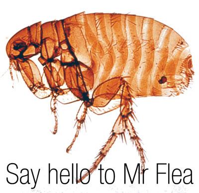 Say hello to Mr flea