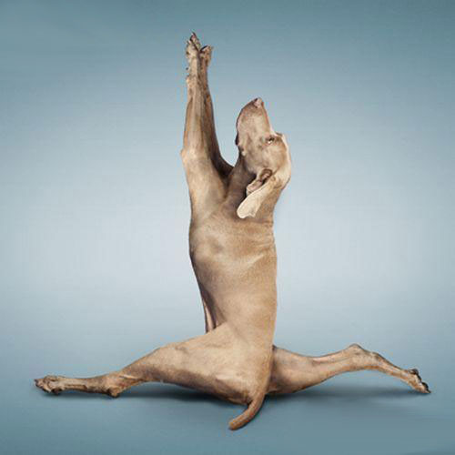 Yoga for pets
