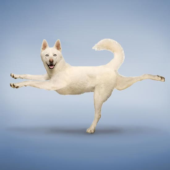 Yoga helps stimulate pets