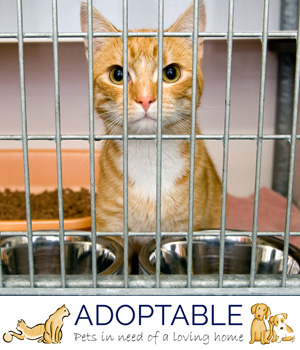 adopt a homeless cat - adoptable