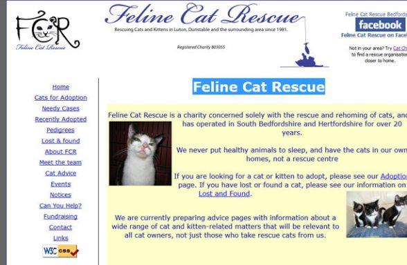 Feline Cat Rescue - Luton