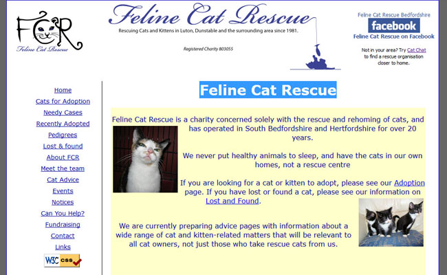 Feline Cat Rescue - Luton