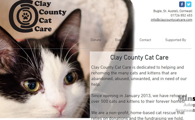 Clay County Cat Care - St. Austell