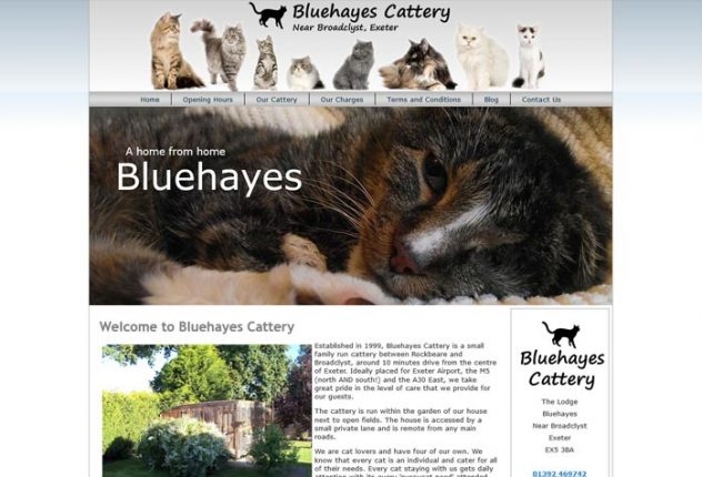 Bluehayes Cattery