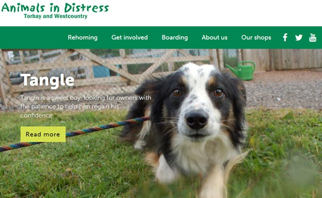 Animals in Distress - Newton Abbot