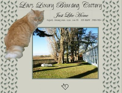 Lulu's Luxury Boarding Cattery