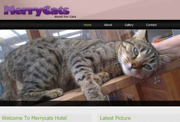 MerryCats Hotel For Cats