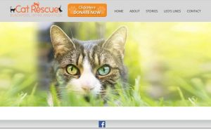 Cat Rescue Blackpool and Fylde - Lytham St. Annes