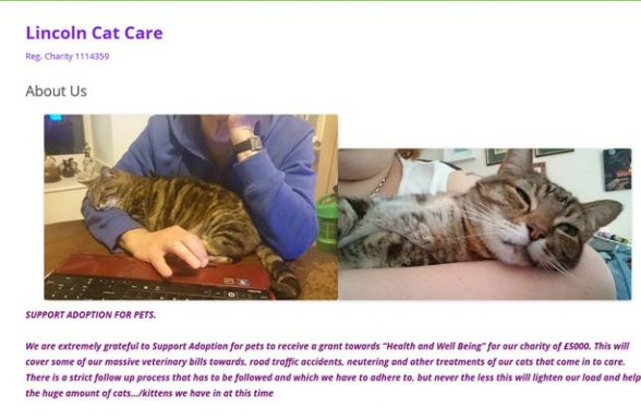 Lincoln Cat Care - Lincoln