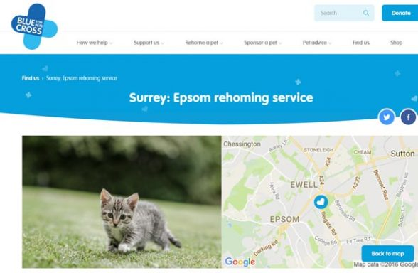 Blue Cross Rehoming Service - Ewell