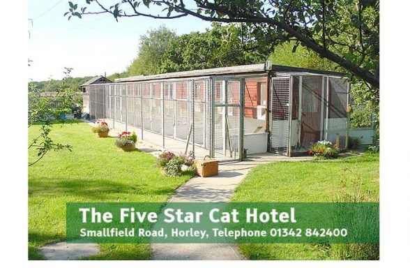 Five Star Cat Hotel