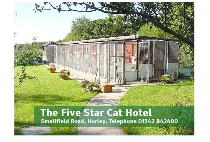 Five Star Cat Hotel