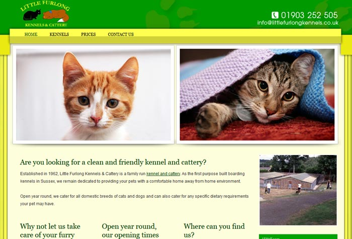 Rescue Cats In West Sussex