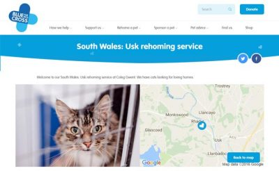 Blue Cross Rehoming Service - Usk