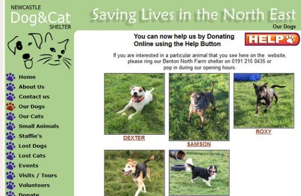 Newcastle Dog and Cat Shelter - Newcastle
