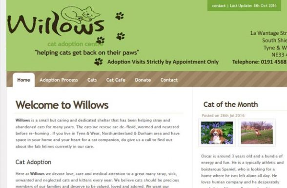 Willows Cat Adoption Centre - South Shields