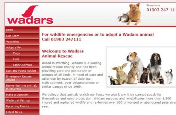 Cat Rescue Worthing West Sussex