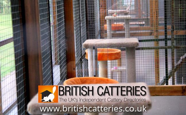 Boarding Catteries In Kent